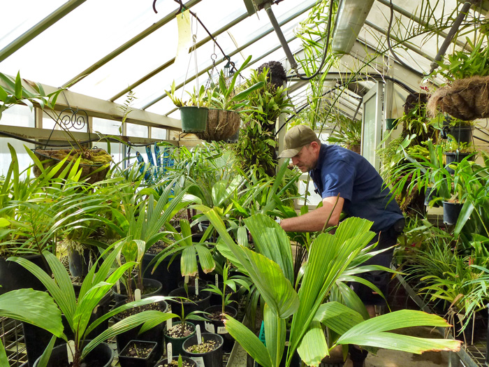 Working in the Glasshouse