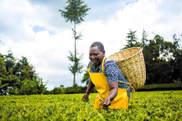 Teresa Kurgat, tea farmer