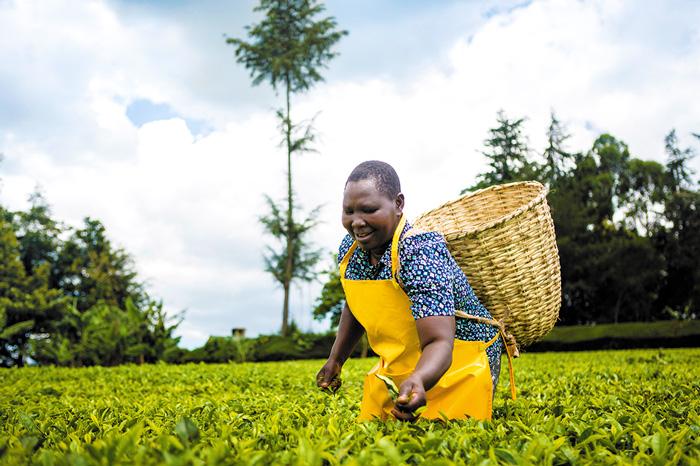 Teresa Kurgat, tea farmer