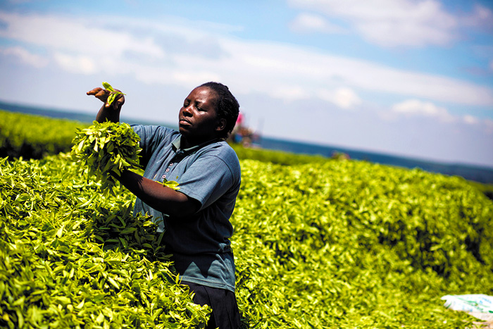 Rahel Mhabuka, tea worker