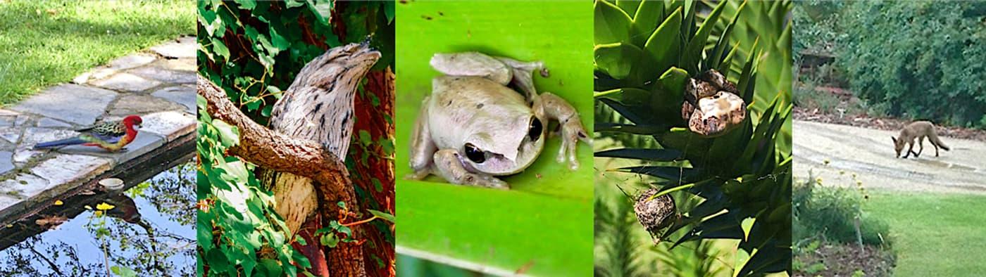 System Garden wildlife